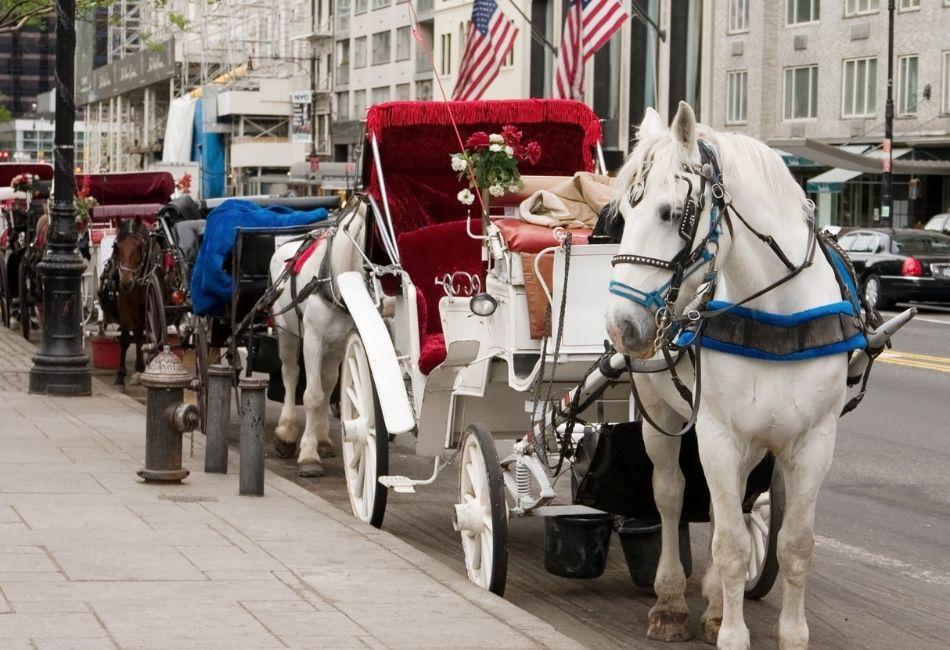 skogshästen - flera vagnar