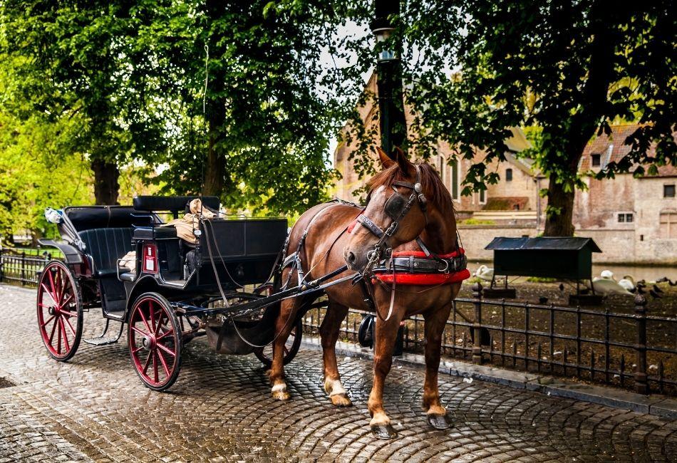 skogshästen - häst med vagn
